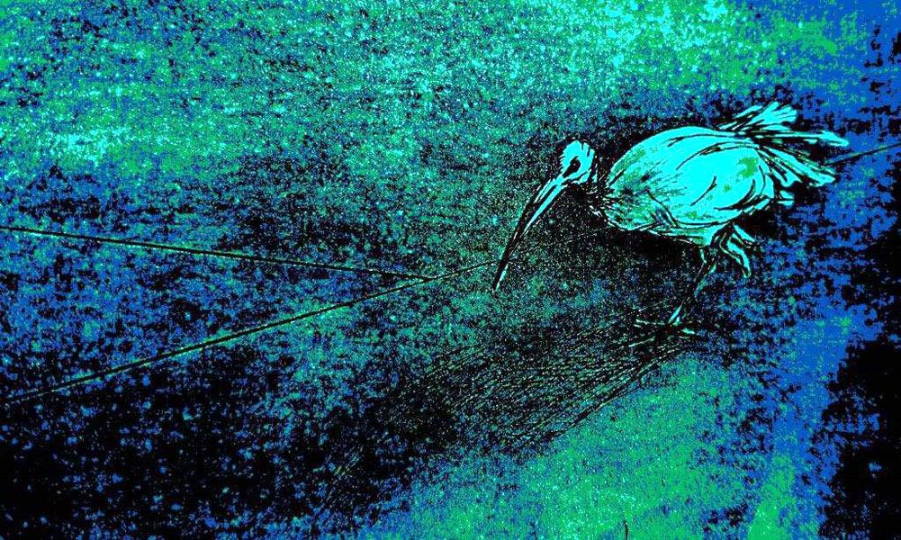 Mixed media print of ibis bird