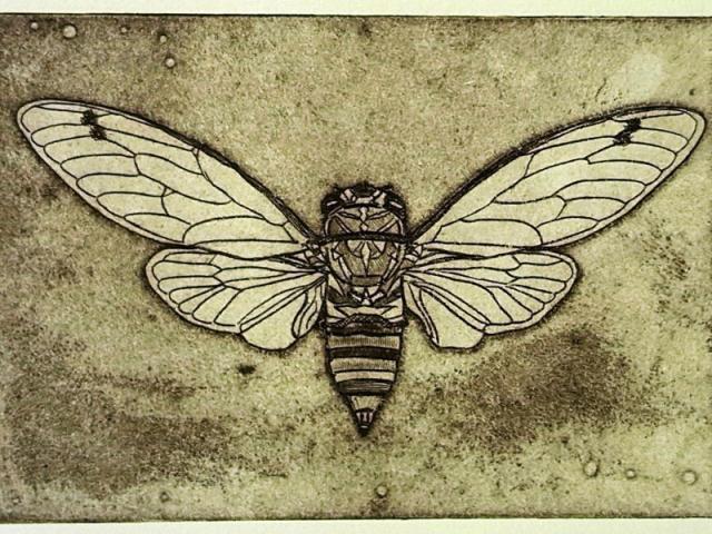 Print of cicada