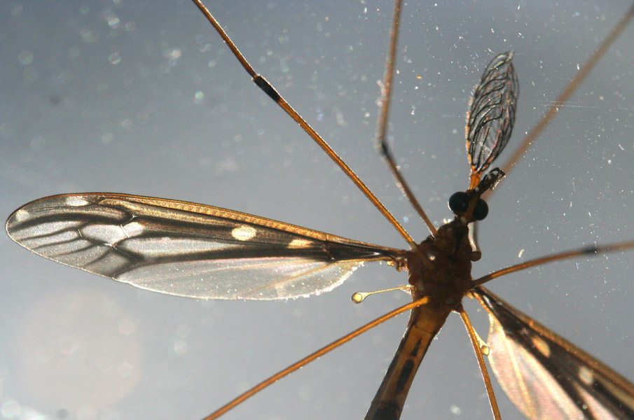 Photograph of macro dragonfly