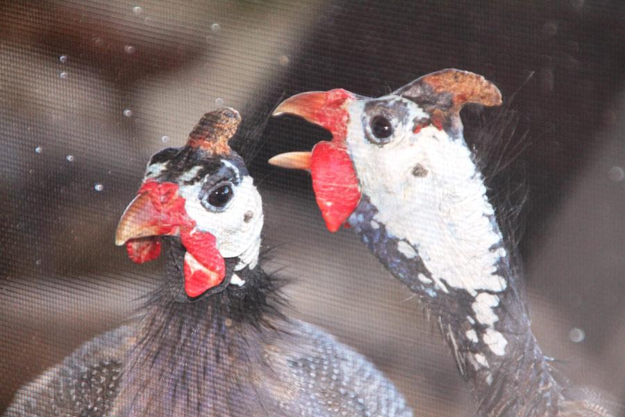 Photograph of birds