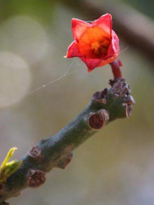 Photograph of flower