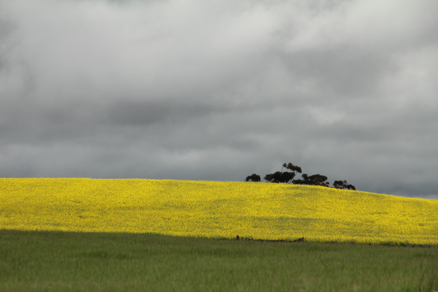 Photograph of overcast field