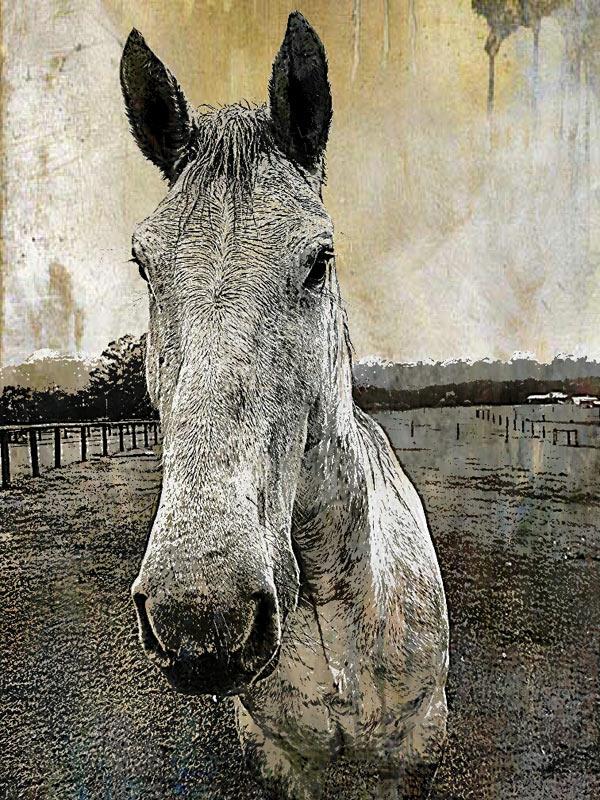 Mixed media digital print of horse