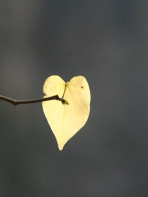 Photograph of leaf and branch